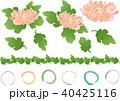 菊 葉 植物のイラスト 40425116