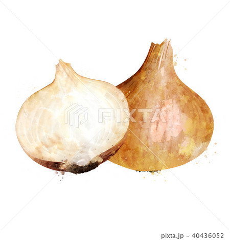 Onion on white background. Watercolor illustration 40436052