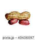 Peanut on white background. Watercolor illustration 40436097