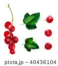 Red currant on white background. Watercolor illustration 40436104