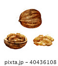 Walnut on white background. Watercolor illustration 40436108