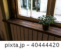 観葉植物 植物 窓の写真 40444420