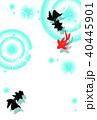 金魚 夏 波紋のイラスト 40445901