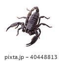 scorpion on white background 40448813
