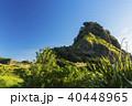 ニュージーランド ピハ・ビーチのライオンロック 40448965