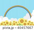 向日葵 40457667