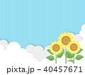 向日葵 40457671