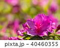 花 つつじ クローズアップの写真 40460355
