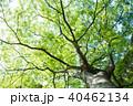 木 枝 若葉の写真 40462134
