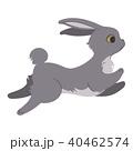 グレー うさぎ ウサギのイラスト 40462574