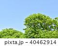 樹木 木 空の写真 40462914
