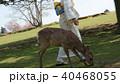 奈良の鹿と着物 40468055