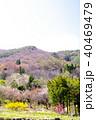 花桃 桃の花 桃の写真 40469479