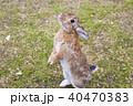 うさぎ 小動物 卯の写真 40470383