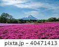 富士山 芝桜 春の写真 40471413