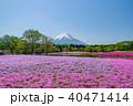 富士山 芝桜 春の写真 40471414