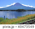 河口湖と富士山-7561 40473549