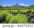 ほうき草と富士山-7564 40473552