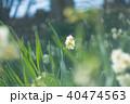 水仙 40474563