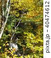 石仏 石像 黄葉の写真 40474612