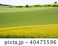 風景 畑 夏の写真 40475596