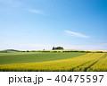 風景 畑 ムギ畑の写真 40475597