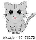 猫(アメリカンショートヘア) 40476272