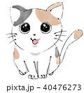 三毛猫 40476273