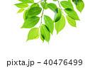 新緑 エコ 葉の写真 40476499