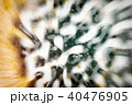 Microscopic phot with organisms and abstract shapes 40476905
