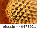 Microscopic phot with organisms and abstract shapes 40476921