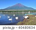 山中湖の白鳥と富士山-7553 40480634