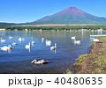 山中湖の白鳥と富士山-7554 40480635