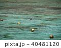グアムの澄んだ青い海 シュノーケリング 40481120