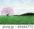 小岩井農場の1本桜 小岩井農場 1本桜 40484772