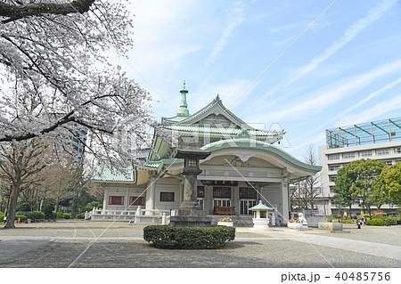 東京都墨田区両国 春の横網町公園 桜 40485756