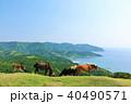 宮崎県 都井岬からの風景と馬たち 40490571