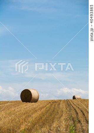 収穫が終わったムギ畑に広がるムギロール 40493865