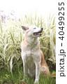 笑顔で座る犬とハチジョウススキ 40499255