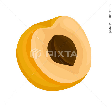 Half of fresh ripe apricot with bone. Natural and sweet fruit. Decorative flat vector element for 40499595