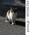白地にブチ柄の猫 40506769