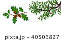 樫 小枝 植物のイラスト 40506827