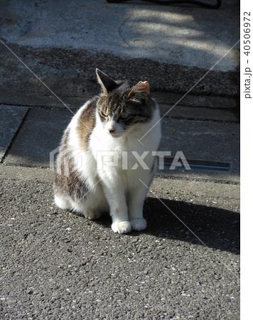 白地にブチ柄の猫 40506972