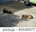 駐車場に寝そべる2匹の猫 40506977