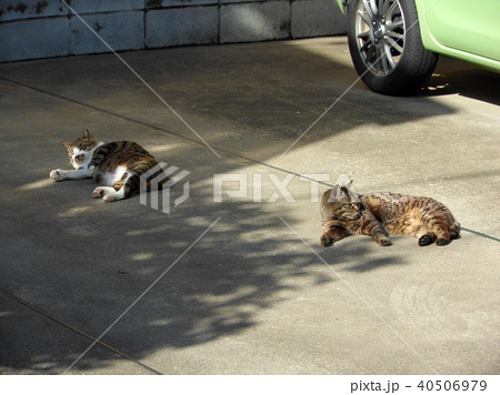 駐車場に寝そべる2匹の猫 40506979