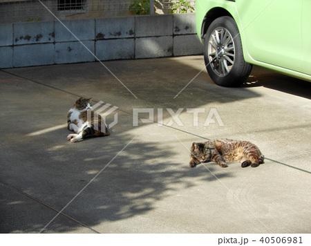 駐車場に寝そべる2匹の猫 40506981