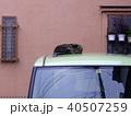 車の上に寝るキジトラ猫 40507259