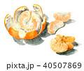夏みかん 皮 果物のイラスト 40507869
