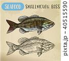 シーフード 海の幸 魚介類のイラスト 40515590