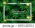 マリファナ アサ ベクターのイラスト 40518351